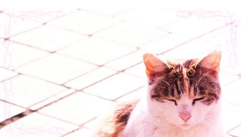 vita_cat_bar.jpg