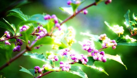 キラキラ木の実