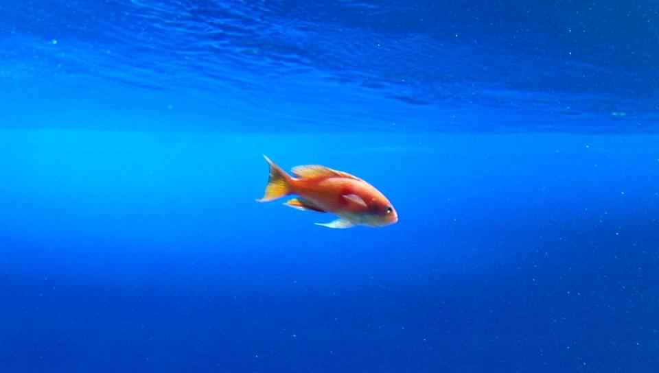 vita_fish.jpg